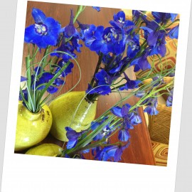 Bring on the Blues with Beautiful Delphinium!